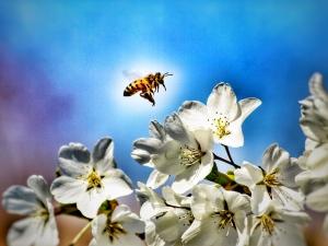honeybee2013DKirk
